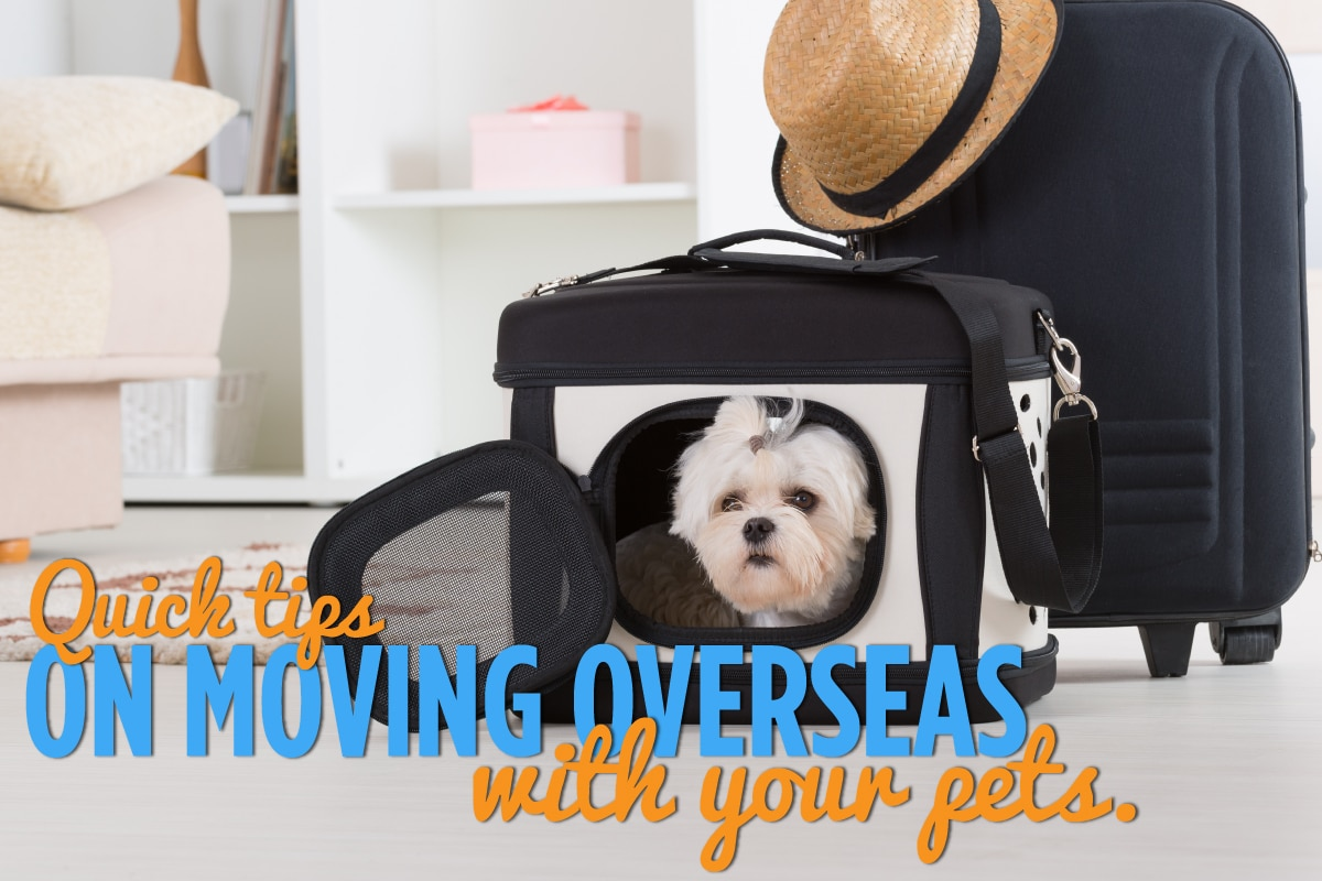 Pets Moving Overseas Header Image WillShip NZ